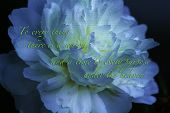 image of bible verses  - Bible verse with flower and the text Ecclesiastes 3 - JPG