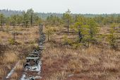 Old Boardwalk in Bog