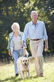 image of heterosexual couple  - Senior couple walking dog - JPG