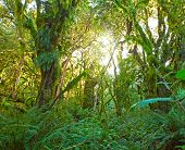 stock photo of temperance  - Temperate rain forest with Fern  - JPG