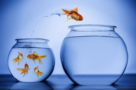 picture of fishbowl  - Gold Fish jumping from one fish bowl to another - JPG