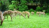 stock photo of deer family  - an image of deers in the Zoo - JPG