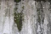 picture of nasty  - An old molded grunge concrete texture background - JPG