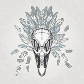 picture of ostrich plumage  - Ostrich skull on a plumage background - JPG