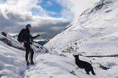 foto of snow border  - beautiful border collie plays with the snow on the mountain  - JPG