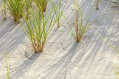 foto of wind blown  - Wind blown grass on fine sand dune - JPG