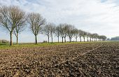picture of beside  - Long row of bare trees beside a country road and a ploughed field of clay ground in a Dutch polder landscape in the fall season - JPG