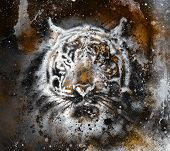 pic of tiger cub  - tiger collage on color abstract background rust structure wildlife animals - JPG