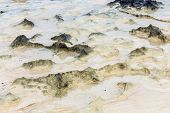 picture of tide  - scenic beach dunes created by the low tide - JPG