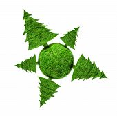 picture of fir  - Protect the environment concept  - JPG