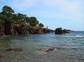 foto of vegetation  - Here you can find Esterel Corniche and  the extraordinary sight of the red Esterel rock plunging into the sea where the varying shades of green and blue change according to the seasons - JPG