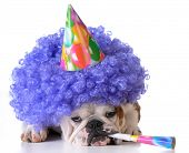 picture of clown face  - birthday dog  - JPG