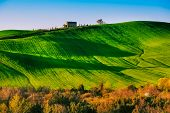 Постер, плакат: Trees And Farmland Near Volterra Rolling Hills On Sunset Rural Landscape Tuscany Italy