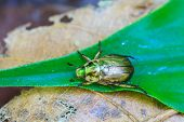 pic of leaf insect  - Insect on leaf - JPG