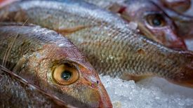 stock photo of red snapper  - Red Snapper fish on ice - JPG