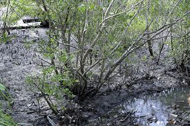 image of ecosystem  - view of mangue tropical ecosystem in brazil - JPG