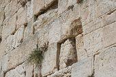 stock photo of tora  - The Wailing Wall  - JPG
