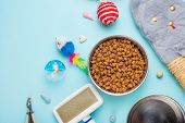 Pets And Cute Animals, Pets, Cute Cats, Food And Accessories For Cats Life, Flat Lay, Space For A D poster