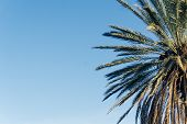 Palms. Palm Tree Against Blue Sky. Green Palm Leaves poster