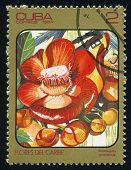 Cuba - Circa 1984: Post Stamp Printed In Cuba Shows Image Of Couroupita Guianensis (cannonball Tree)