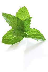image of mint leaf  - Fresh mint leaves casting shadow on white surface - JPG