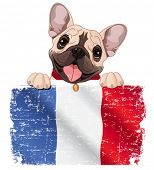stock photo of french culture  - Illustration of French bulldog fan holds French flag - JPG