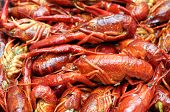 stock photo of craw  - closeup boiled craw fish for background uses - JPG
