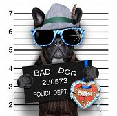 stock photo of delinquency  - mugshot bavarian dog with a police banner - JPG