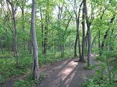 picture of starving  - Sunlight tree reelections in spring on River Bluff Path at Starved Rock - JPG