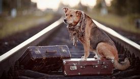 stock photo of dog tracks  - Dog on rails with suitcases - JPG