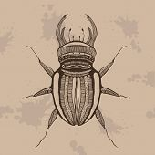 pic of carapace  - Vector illustration of  animal  - JPG