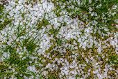 image of hail  - The pieces of hail on the grass - JPG