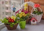 stock photo of primrose  - Spring composition of daisies and primroses in baskets on window - JPG