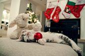 picture of baby cat  - Baby cat - JPG