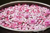 stock photo of rose  - Roses and rose petals in a bowl filled with water - JPG