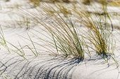 stock photo of dune grass  - Close shot of dune grass in sand on the coast of the Baltic Sea - JPG