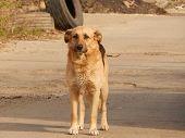 stock photo of homeless  - Abandoned homeless dog alone at the dump  - JPG