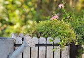 foto of planters  - green plant in white wooden planter with little metal watering can - JPG
