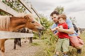 Toddler Boy And His Father Feeding A Pony At Farm poster
