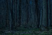 Night Forest With Tall Trees And Green Grass Bewitching Landscape Nobody Around poster