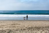 Man In A Wetsuit Plays Fetch With His Dog At The Beach poster