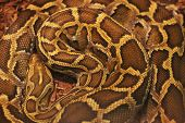 foto of jungle snake  - Close up of the bright - JPG