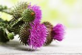 image of scottish thistle  - Thistle flowers on nature background - JPG
