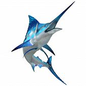 image of swordfish  - The Blue Marlin is a popular big game fish for fishermen and inhabits oceans throughout the world - JPG