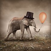 pic of apologize  - Elephant with a orange balloon - JPG