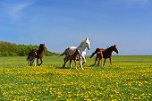foto of pastures  - A horse with a foal in the pasture - JPG