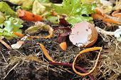 stock photo of humus  - various wastes with eggs and vegetable for composting - JPG
