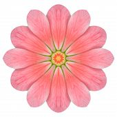 Pink Hydrangea Flower Mandala Isolated On White
