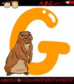 pic of gopher  - Cartoon Illustration of Capital Letter G from Alphabet with Gopher Animal for Children Education - JPG