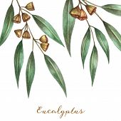 stock photo of ester  - Watercolor eucalyptus leaves and branches - JPG